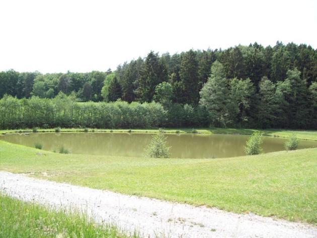 Steinbacher Weiher